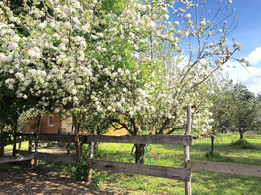 giardino bb valmontone