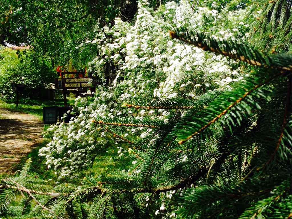 una-fioritura-nel-giardino